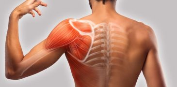 Causes and Remedies for Shoulder Blade Muscle Pain and Hand Muscle Pain