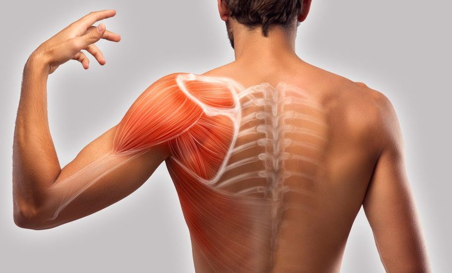 Causes And Remedies For Shoulder Blade Muscle Pain And Hand Muscle